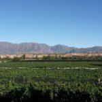 Vignobles de la vallée de Concepcion.