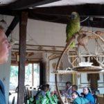 Pierre et un perroquet font connaissance sur fond de Mennonites