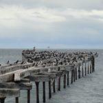 Punta Arena, les oiseaux sont aussi endormis ...