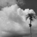 Des palmiers partout, ça sent bon les vacances